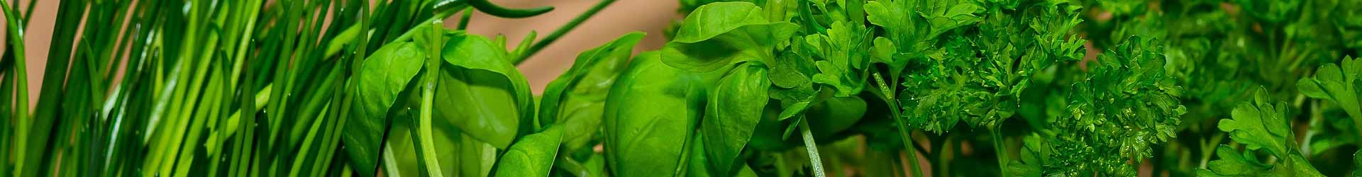 Technical Ways on How to Store Asian Basil After it is Harvested